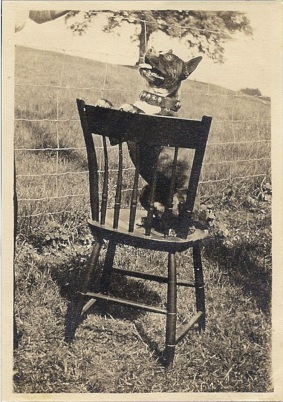 Begging Dog on Chair c. 1920
