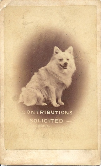 Contributions solicited