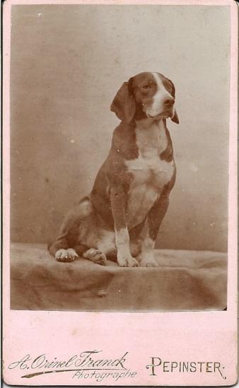 Hound, CDV. c. 1890