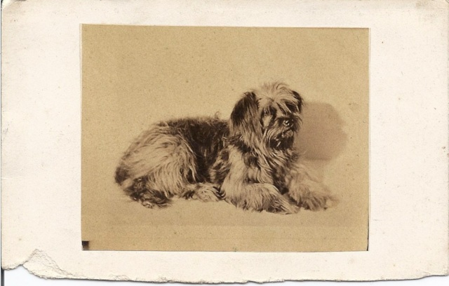 CDV size image c. 1890 of a terrier