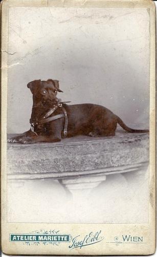 CDV c. 1890