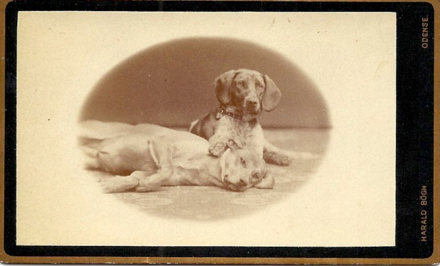 CDV c. 1890 Two Hounds