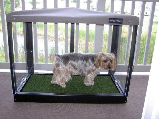 Best Indoor Dog Potty Solutions